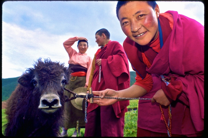 Nuns walk with their dri ( a juvenile yak) on the Plateau of Tibet. Image copyright Ana Elisa Fuentes. Photographed on color slide film, donated by Kodak. Selected for the Voice exhibition, on the occasion of The First Permanent Forum on Indigenous Issues, United Nations.